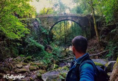 Los bosques más bonitos de Galicia