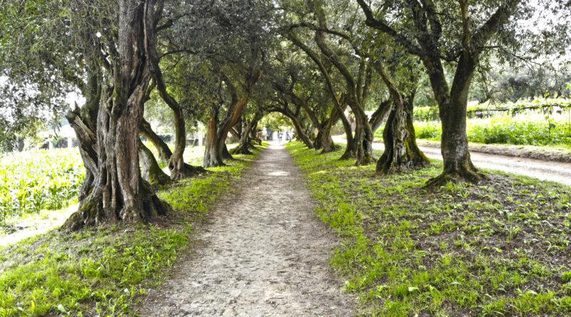 Los pazos más bonitos de Galicia